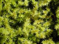 Moss World 1