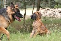dog tico and friend