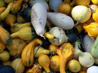 Pumpkins in fall 6