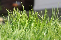 Grassy Garden 1