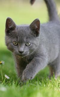 Hunting kitten 2