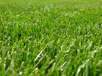 Grass 1