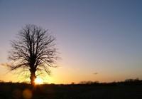 Boonakker Tree
