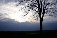 Tree silhouet at dusk