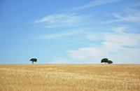 Lonliest Tree II 1