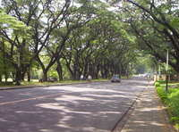 UP Diliman 3