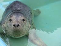 Seal Pick Me