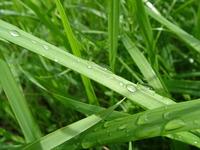 Zoom grass