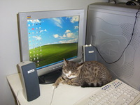 Computer & Cat