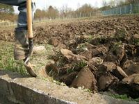 Dig a Garden 1