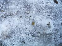 moss-grown rock texture