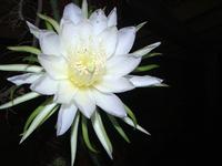 Flor aberta