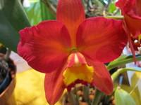 Hawaiian Flowers 9