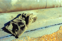 Lone Glove
