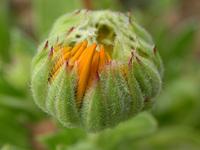 Plante inconnue 32