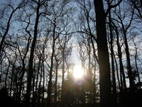 Duch prírody - duch lesa - žiara slnka presvitá pomedzi stromy v lese