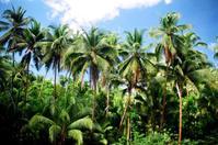 Dreamy palm trees. 1