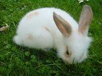 little white bunny 4