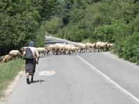Bulgarian Nature 4