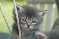 Cat story 3