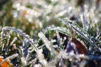 Frosty grass 3