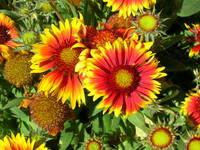 Beautiful Flowers 1