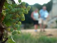 white grapes France