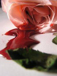 bleeding roses 11