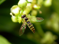 Insecte 10