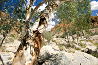 Alice Springs in Summer