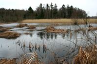 Lake and bog 2