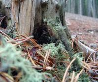 Tree Stump 01