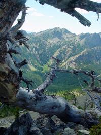 gnarled tree framing mountaing