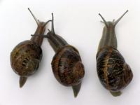 Tres_caracoles