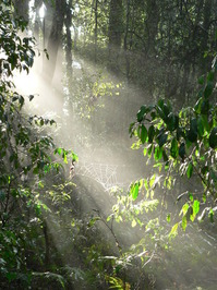 Light through the forest