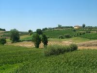 Colline a Vinci, Toscana