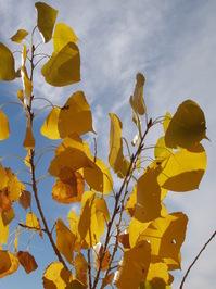 Autumn Leaves Series 2