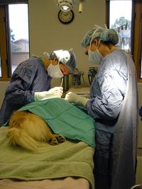 Pet Surgery 1