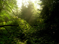morning sun in forest