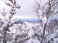 Sierra Snowscape