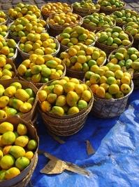 Brazilian Mango