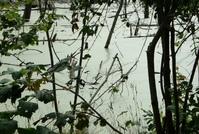 hidden lake 1