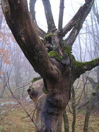 cres tree 1