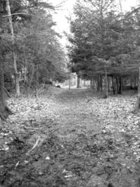 Woods_0 6