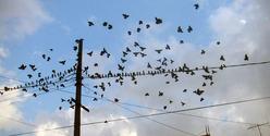 birds in wire