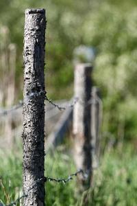 Fence Posts 2