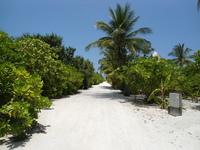 Desert Island 19