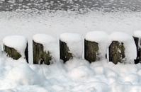 Logs in snow