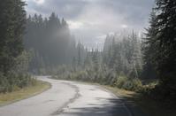Autumn morning road 1