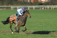 Racehorse 1